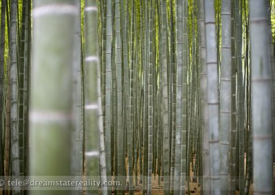 bamboo_forest_green_peaceful_sagano_arashiyama_kyoto_japan