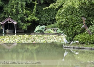ryoan-ji_zen_garden_temple_lake_bird_kyoto_japan