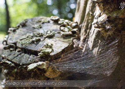 grovelands_park_london_uk_wood_spider_web_mould