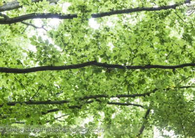 trent_park_london_uk_green_leaves